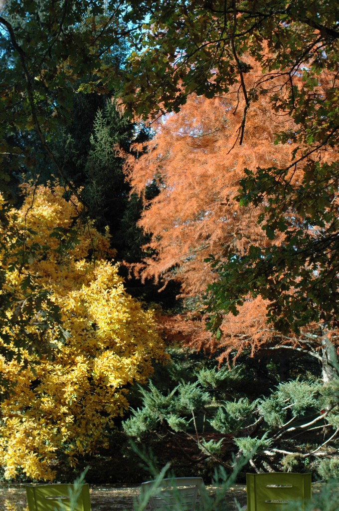 Le jardin des metamorphozes actualit s for Jardin neurodon 2015